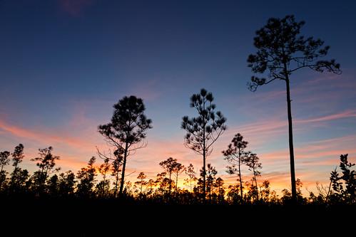 florida evergladesnationalpark longpinekey canon24105mm miamidadecounty canon5dmarkii
