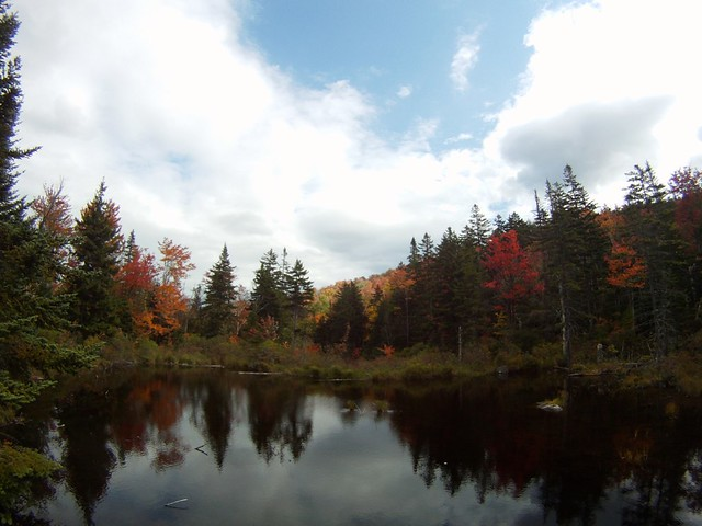 beaver pond/peak foliage