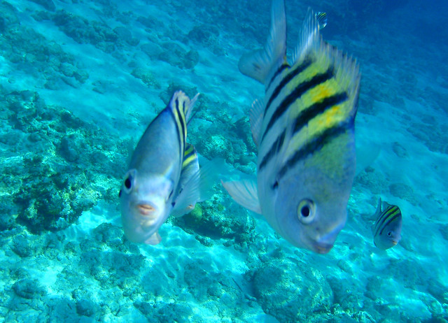 Modal title for Deep sea fishing grand cayman
