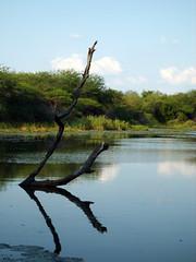 Kruger Park Lake