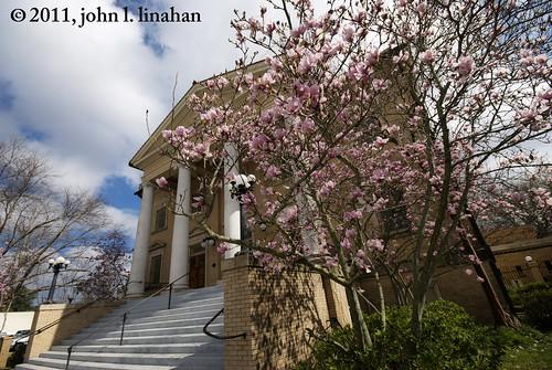 flowers flower nikon louisiana downtown lafayette columns steps wideangle sigma1020mm japanesemagnolia firstunitedmethodistchurch 2013 d80