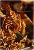 ذبل الورد بـ غيابك ! by Huda Hussain