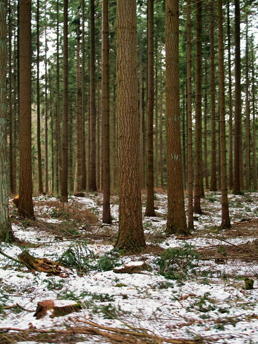 trees winter cold nature alberi canon season landscape vinter view natur landschaft bäume träd landskap g12 whitetimes