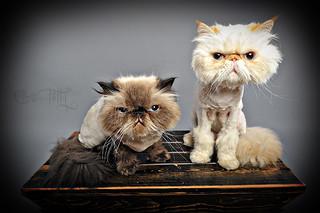 188/365: We gotz haircutz... [Explored!]