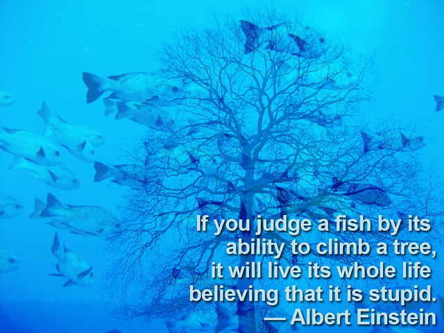 Fish tree einstein quote flickr photo sharing for Fish in a tree
