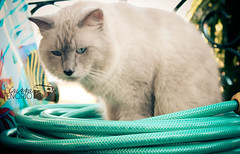 cat and hose