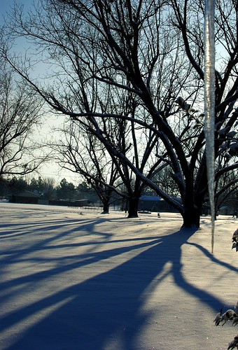 snow tree shadows vanburen icicle arkansas february pecan concordians