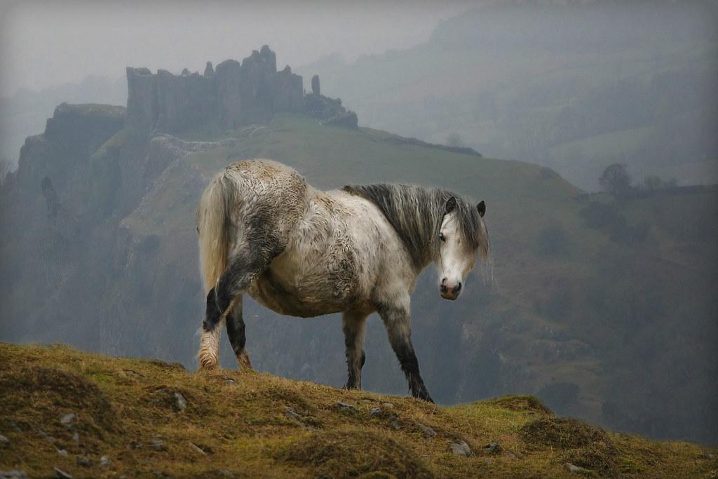 Wales Castle Horse