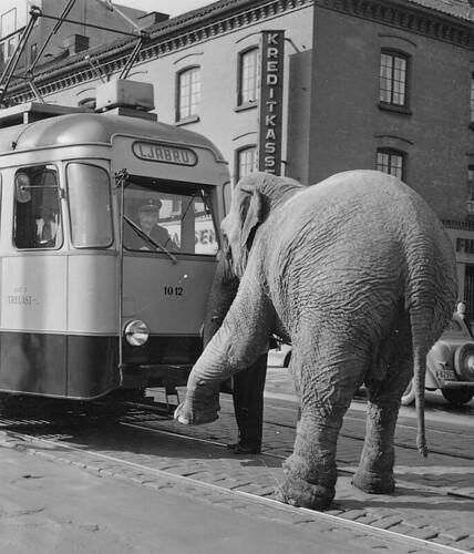 Den indiske elefanten Letzie ved Cirkus Berny
