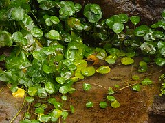 annual plant, algae, leaf, soil, green, aquatic plant,