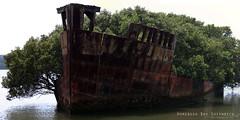 Homebush Bay Shipwreck