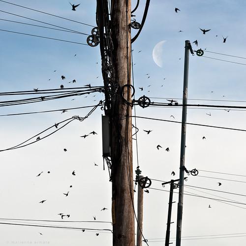 blue sky urban moon canada lines square landscape power quebec montreal circles panasonic clothes hydro poles marianna brids armata perfectsquare lumixg1 mariannaarmata