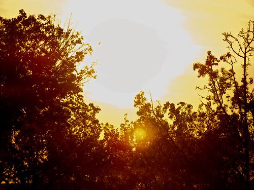 trees sunset nature silhouette georgia albany doughertycounty thesussman fujis5700 albanymall