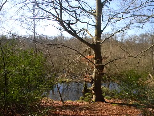 Wet woodlands, Moor Park est.