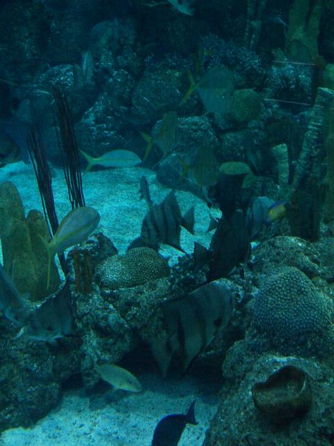 Galveston Texas Moody Gardens Aquarium Pyramid 2011
