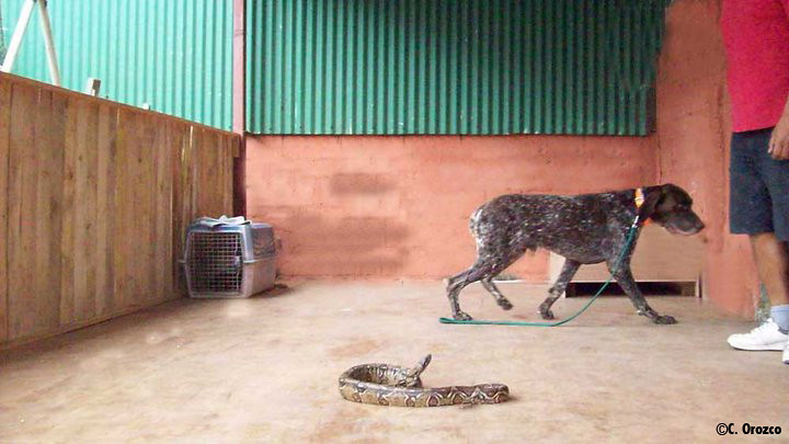 Google's snake avoidance training