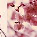 Postal de primavera by Lumen Bigott