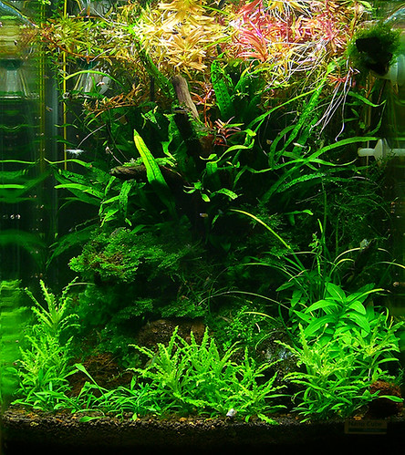 30l wurzelwerk ein nano cube aquarium forum. Black Bedroom Furniture Sets. Home Design Ideas