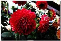 Various Flowers ***
