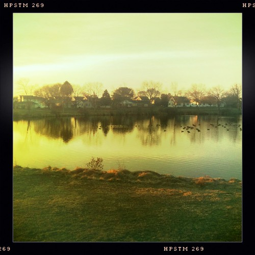 morning houses tree geese pond ripple ducks iphone iphonography hipstamatic