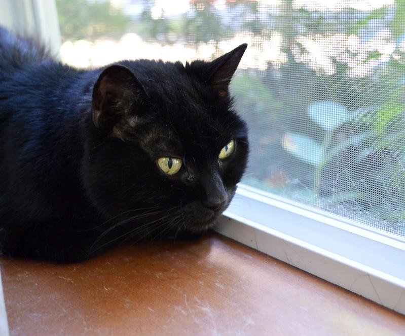 Chilling on the windowsill