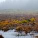 Culloden Moor-5893