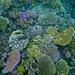 Coral Garden by brian.gratwicke