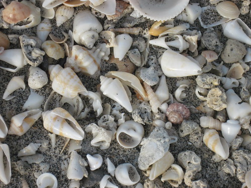 Seashells on Bassa Beach