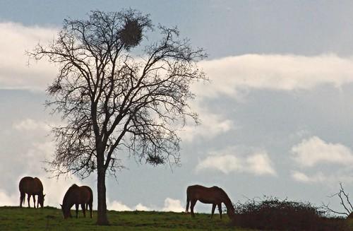 horse farm calaveras equine deathtrap valleysprings calaverascounty edtech3652011