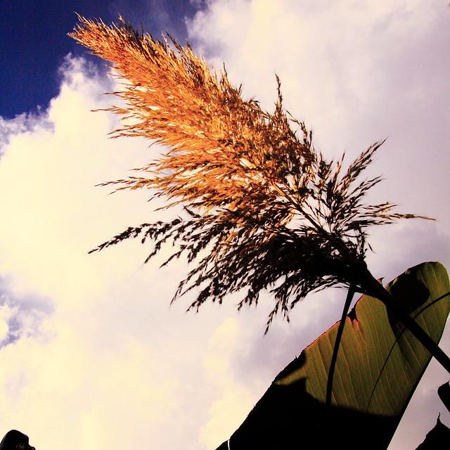 Napier+grasslands+australia