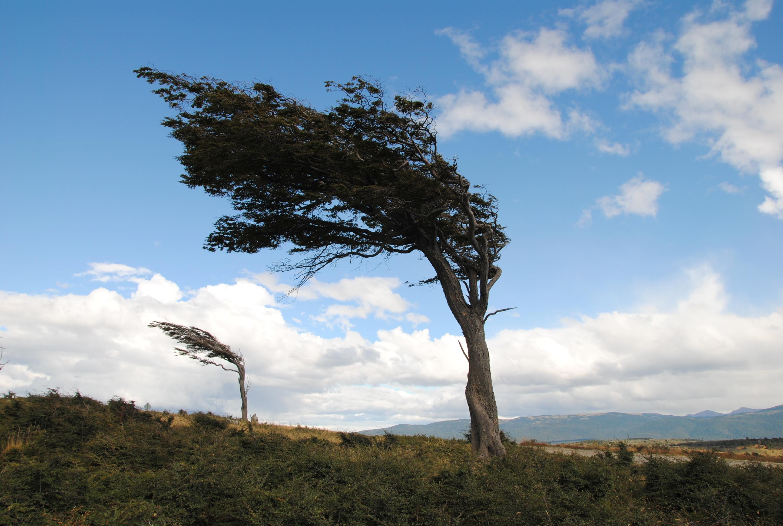 Résultats de recherche d'images pour «vent souffle»