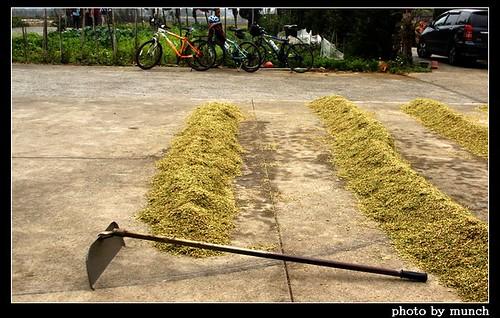 台灣小麥耕種正起步,為台灣續命,配備需精良。(攝影:munch)