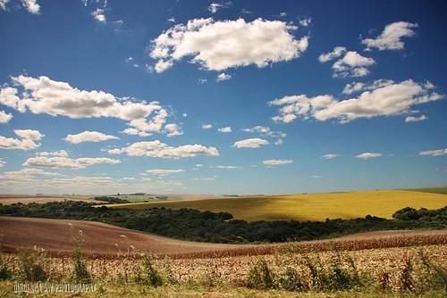brazil verde sol azul brasil clouds canon plantas céu amarelo nuvens cor soja riograndedosul campossulinos regiãosul dircinha pampasgaúchos