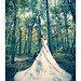 Bride in the forest... by Nicophotography