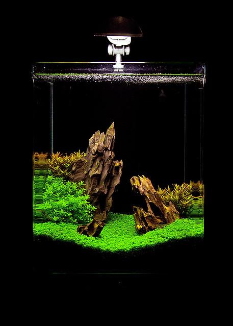 Dennerle Nanocube Aquascaping Explore Farschad Farhadis p ...