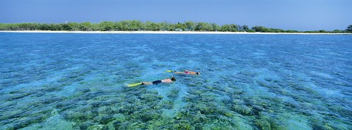 Snorkelling, Southern Great Barrier Reef