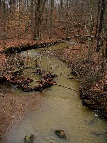 park winter leaves creek woods cloudy walk hike brook slaterun