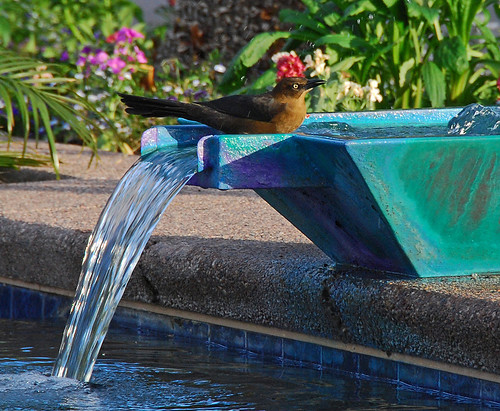 Fountain Bird Bath