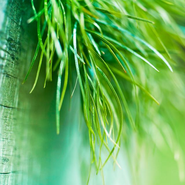 grass macro photography - photo #12