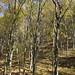 Bukk National Park (Malcolm Stott)
