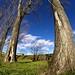 _MG_3455 - Alberi e nuvole.. by mauropaolocascasi