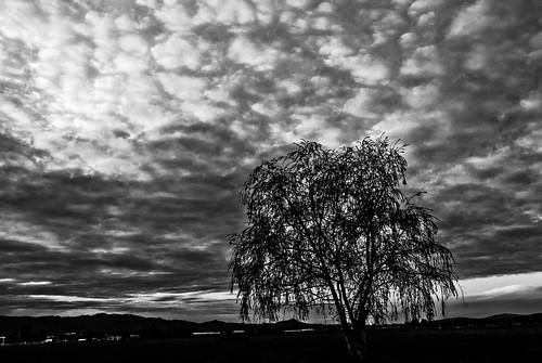 california sunset usa tree field clouds gilroy santaclaracounty felizmojavedad