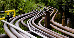 Petrol pipes in the Amazon forest