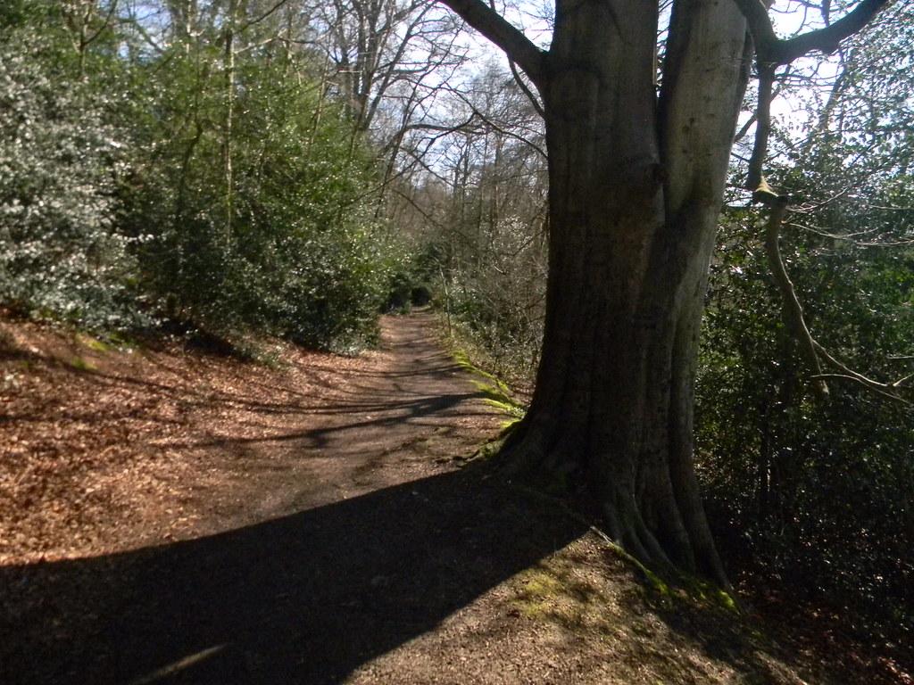 Tree shadow Farnham to Godalming