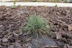 leaf, grass, tree, plant, flora, mulch,