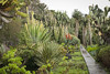 Jardim de suculentas por fabiane13
