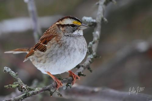 ny birds canon 7d upstatenewyork albanycountyny mygearandme 100x400mmusml