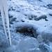 Austin Winter Wonderland 102.jpg