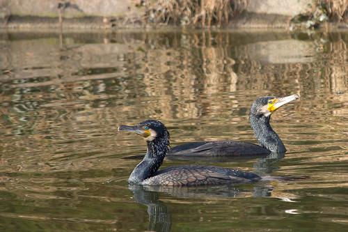 Birds bois de boulogne