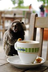 Café Monkey
